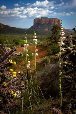 Cactus Flowers And Courthouse Bluff Poster by Dave Garner