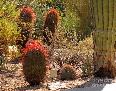 Cactus Garden Poster by Marilyn Smith