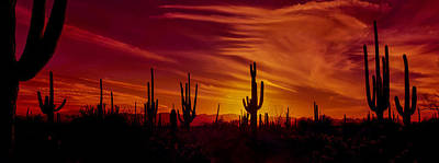 Cactus Glow Poster