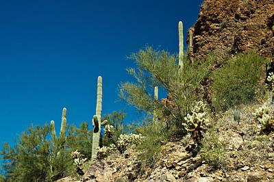 Cactus Landscape 1 Poster