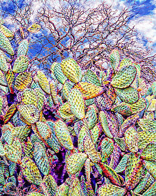 Cactus Of The Sonoma Mission Poster by Ken Evans