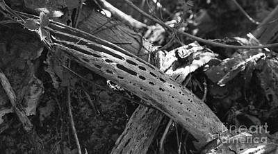 Poster featuring the photograph Cactus Skeleton by Kenny Glotfelty