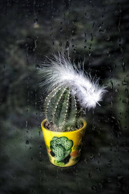 Cactus With Feather Poster by Joana Kruse