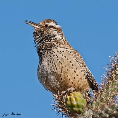 Cactus Wren Singing Poster by Jeff Goulden