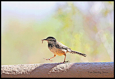 Cactus Wren With Worm Poster