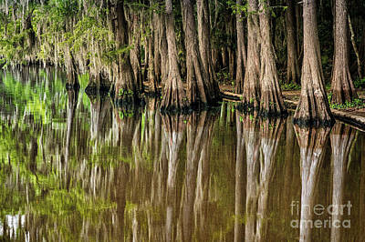 Caddo Lake Cypress Family Poster by Tamyra Ayles