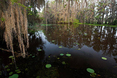 Caddo Lake, Texas's Largest Natural Lake Poster by Larry Ditto