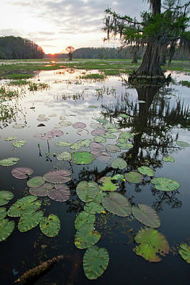Caddo Lake, Texas's Largest Natural Poster