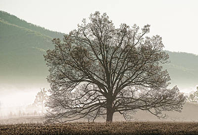 Cades Cove Tree Poster by Phyllis Peterson