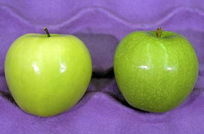 Calcium-treated And Untreated Apple Poster