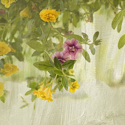 Calibrachoa In Morning Light Poster by Bonnie Bruno