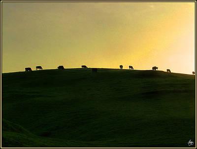 California Coast Cows At Sunset Poster by Wayne King
