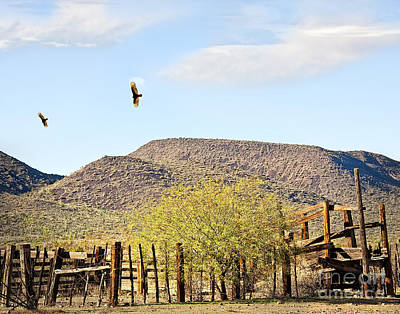 California Condors In Arizona Poster by Lee Craig