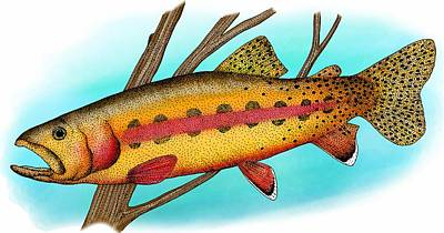 California Golden Trout Poster by Roger Hall