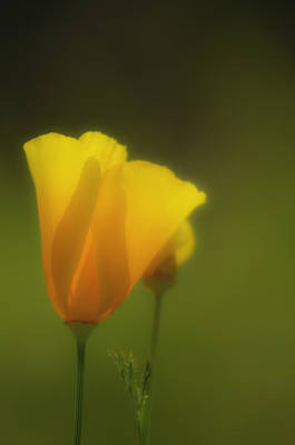 Poster featuring the photograph California Poppies 2 by Sherri Meyer