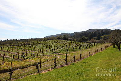 California Vineyards In Late Winter Just Before The Bloom 5d22114 Poster