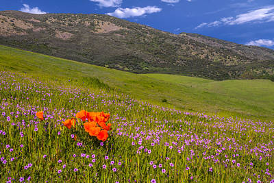 California Wildflowers Poster by Marc Crumpler