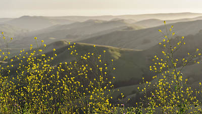 Poster featuring the photograph California Wildflowers by Steven Sparks