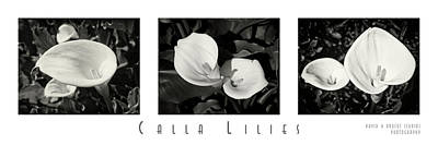 Calla Lilies Horizontal With Title And Nameplate Poster