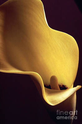 Poster featuring the photograph Calla Lily Close Up by Liz Leyden