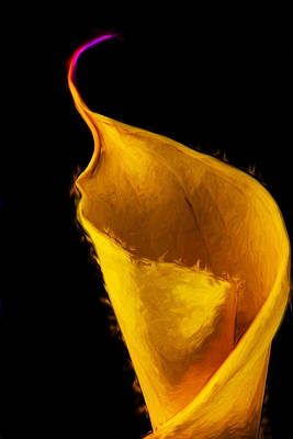 Calla Lily Flower Painted Digitally Poster