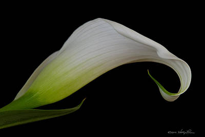 Poster featuring the photograph Calla Lily I by Kathy Ponce