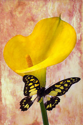 Calla Lily With Butterfly  Poster by Garry Gay