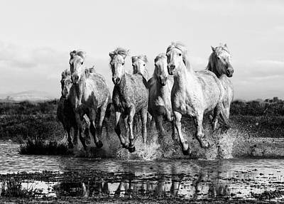 Camargue Horses At The Gallop Bw Poster