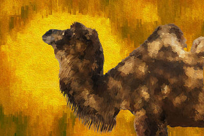 Camel In Desert Sun Poster by Jack Zulli
