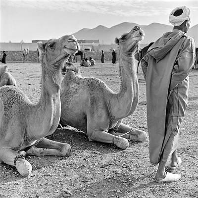 Poster featuring the photograph Camel Market, Morocco, 1972 - Travel Photography By David Perry Lawrence by David Perry Lawrence
