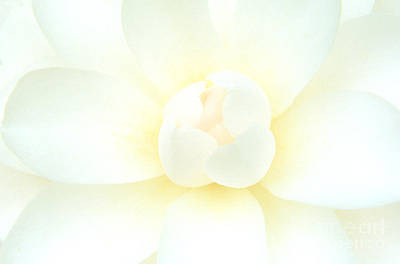 Poster featuring the photograph Camelia Flower by Chris Scroggins