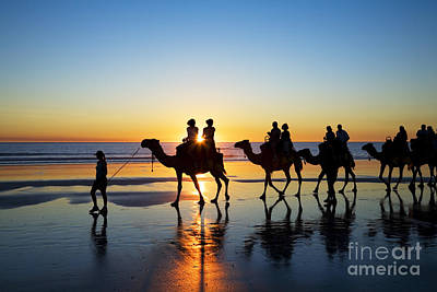 Camels On The Beach Broome Western Australia Poster by Colin and Linda McKie