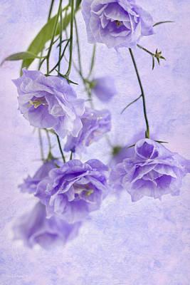 Campanella Blossoms Suspended - Macro Poster