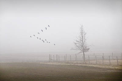 Canada Geese Flying On A Foggy Morning Poster by Randall Nyhof