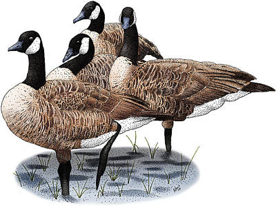 Canada Geese Poster by Roger Hall