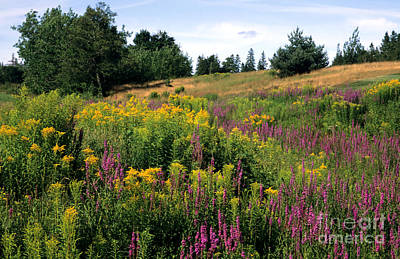 Poster featuring the photograph Canada Wildflower Meadow by Chris Scroggins