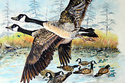 Canadian Geese Flying Poster by Martin Way