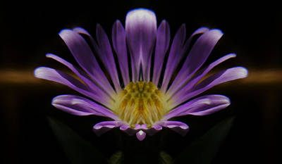 Canadian Purple Wildflower Poster by Barbara St Jean