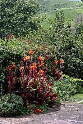 Canna Flowers On Pathway Poster by Linda Phelps