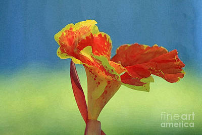 Canna Lily Poster by Karen Adams