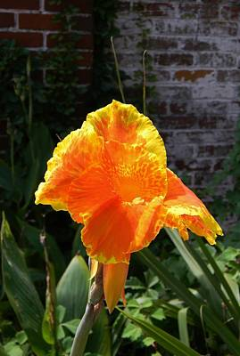 Canna Lily On Brick Poster by Warren Thompson