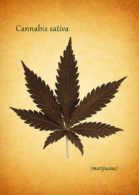 Cannabis Sativa Poster by Mark Rogan