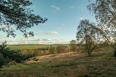 Cannock Chase Forest In Autumn Poster by David Clarke