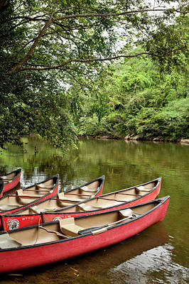 Canoeing The Macal River In Jungle Area Poster by Michele Benoy Westmorland