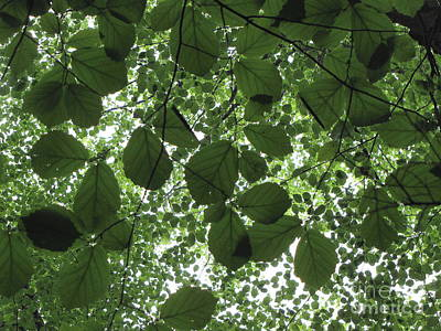 Canopy In Green 3 Poster by Melissa Stoudt