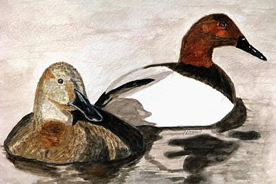 Canvasback Couple Poster