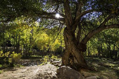 Canyon Lands Sunbeam Poster
