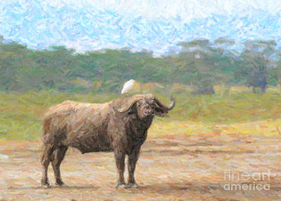Cape Buffalo Syncerus Caffer With Cattle Egret Poster by Liz Leyden