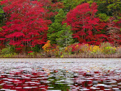 Poster featuring the photograph Cape Cod Autumn by Dianne Cowen