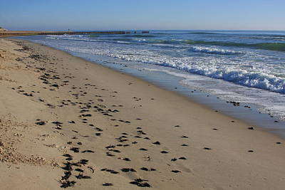 Cape Hatteras - Mermaid's Purse Laiden Beach Poster